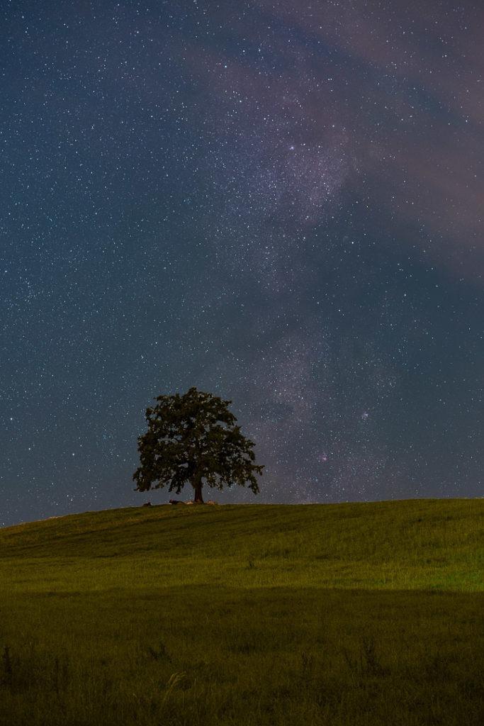 Ein bekannter Baum aus dem bayerischen Umland